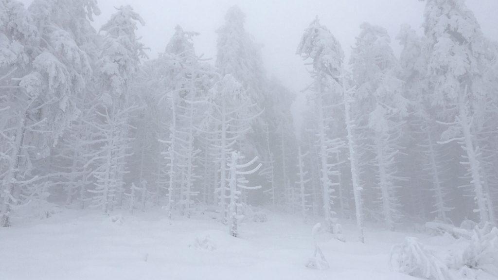Out and about - Winterlandschaft im Schwarzwald.